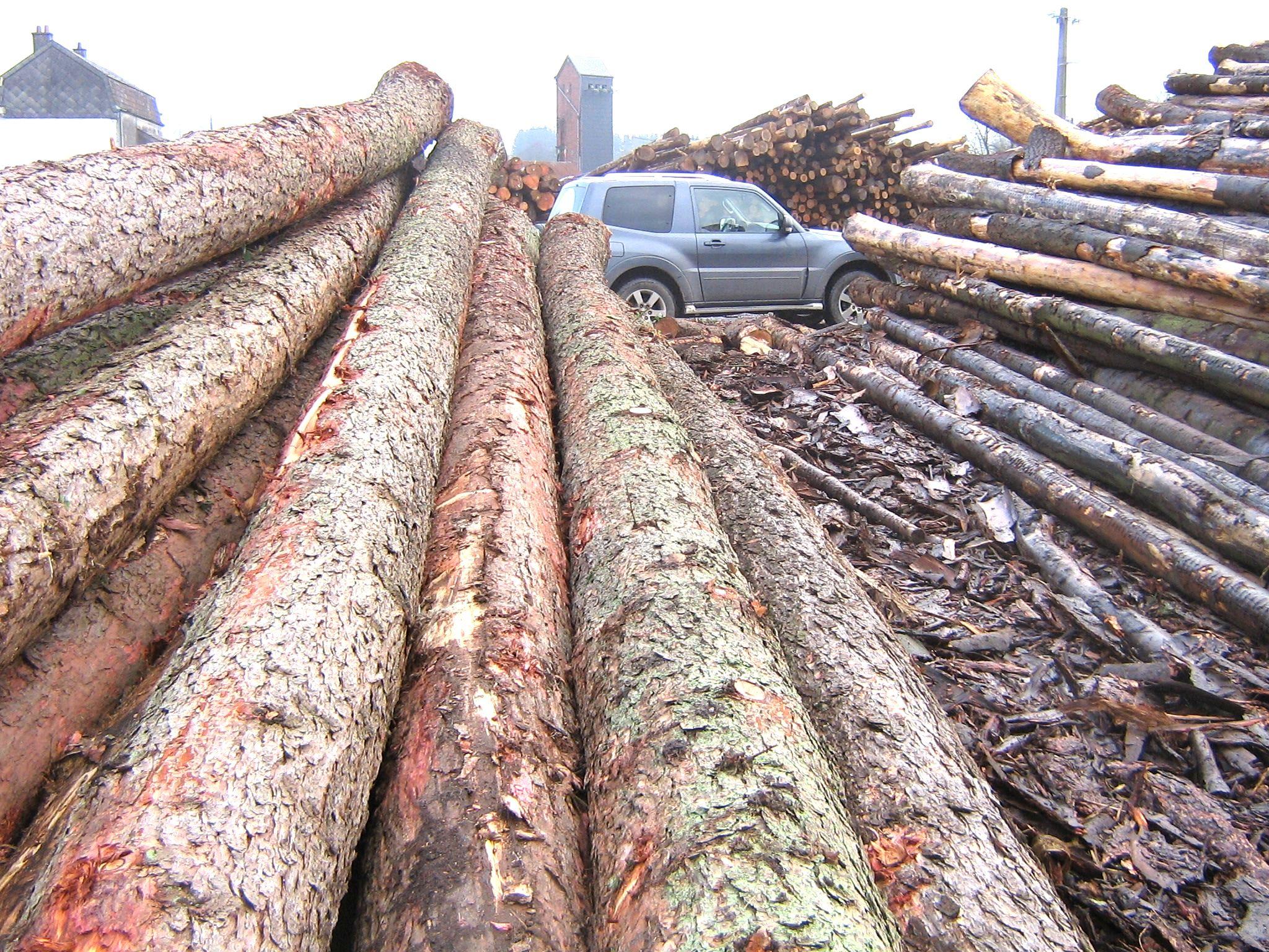 Grume de sciage et billon bois bruts en résineux # Bille De Bois De Sciage