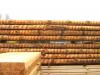 Schoorhout in ontschorst hout